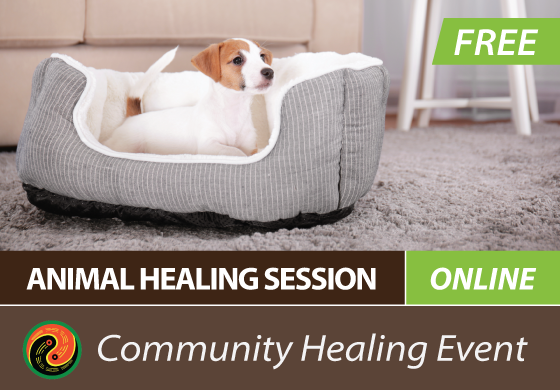 Free Qigong Healing for Animals