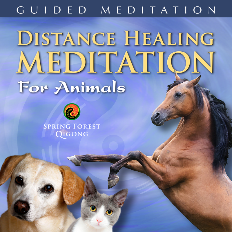 Qigong Healing for Animals