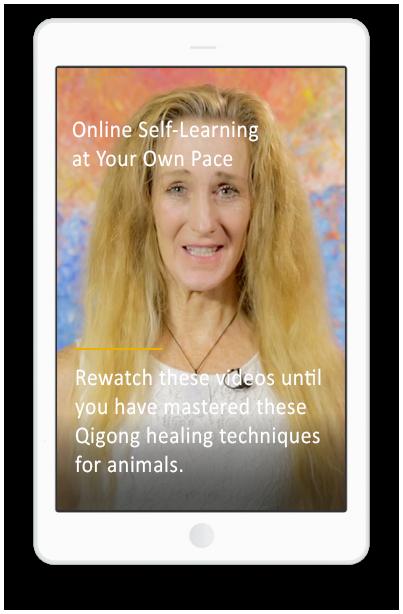 Animal Healing Qigong Course