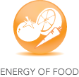 Spring Forest Qigong - Energy of Food