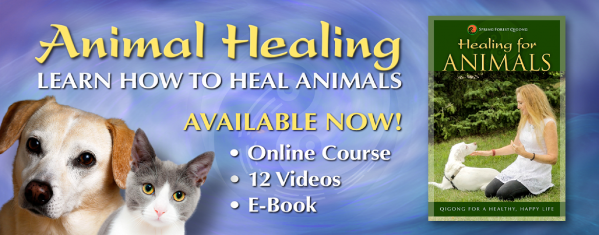 healing-for-animals-course-banner
